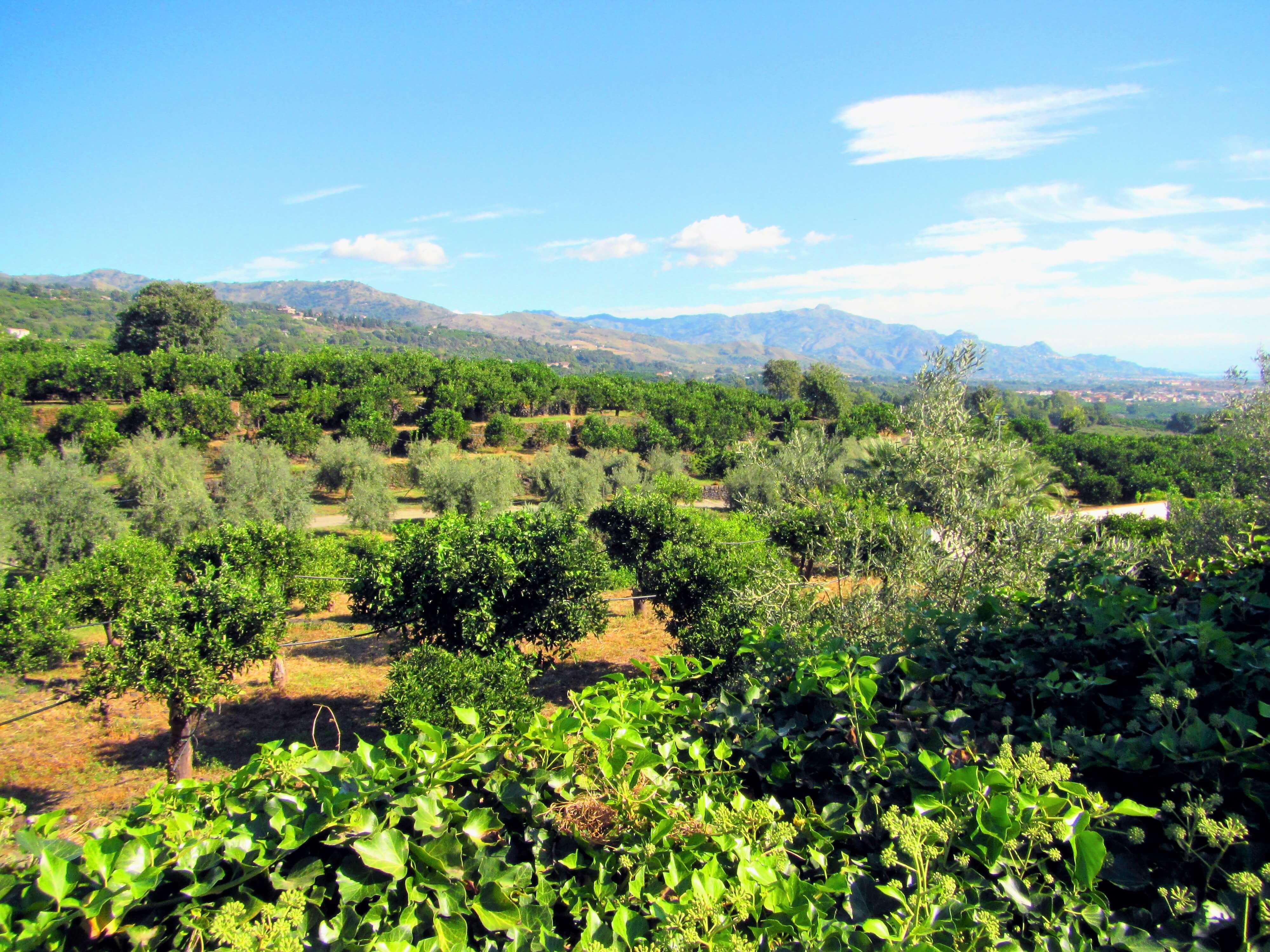 Le grand verger de l'agritourisme bio en Sicile