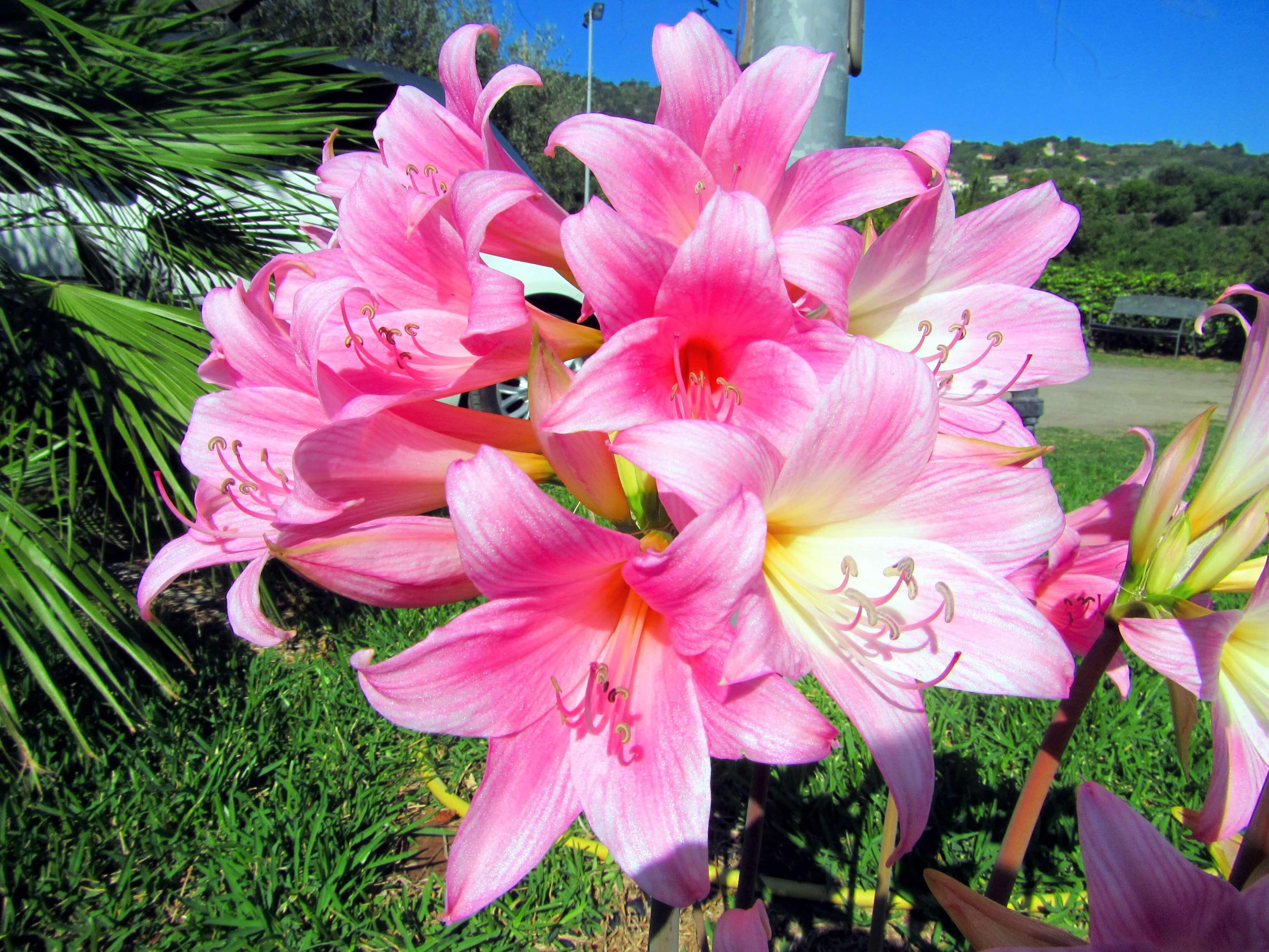 Les fleurs dans le verger de l'agritourisme en Sicile