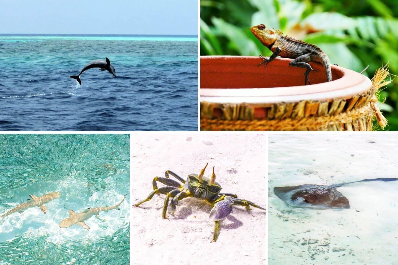 Admirer les animaux des Maldives