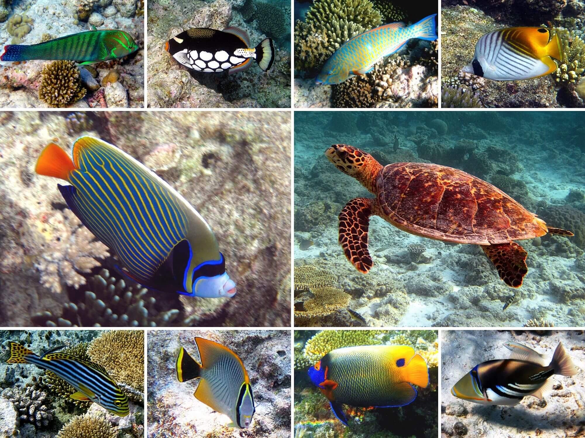 Voir des poissons tropciaux voyage Maldives