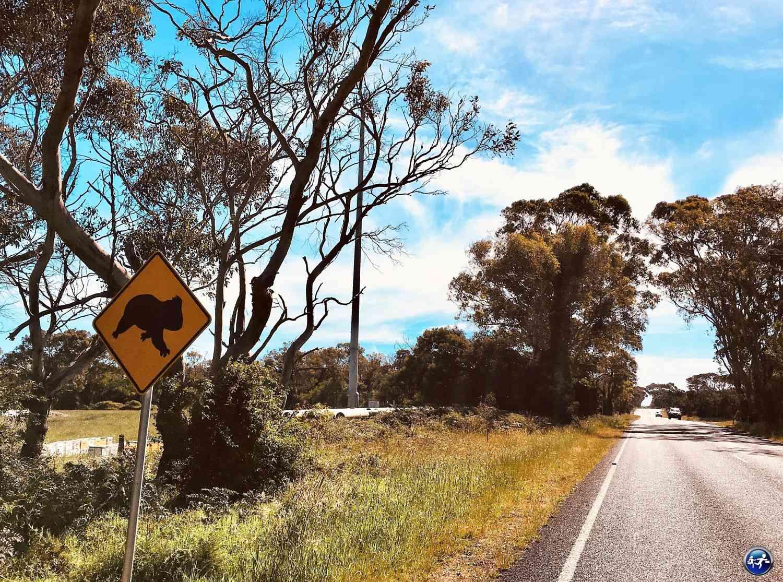 Conduire en Australie avec des animaux qui traversent la route