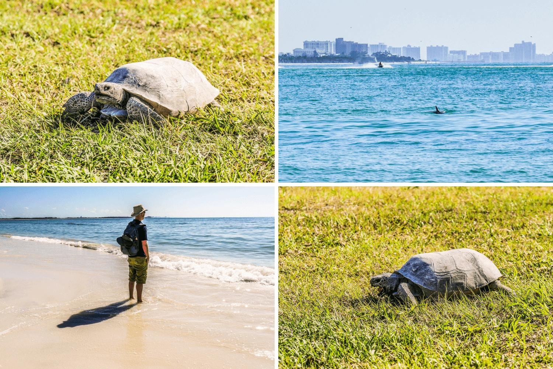 Plage et tortue sur Honeymoon Island en Floride