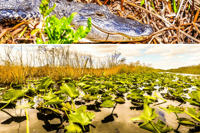 Visiter les Everglades en Floride