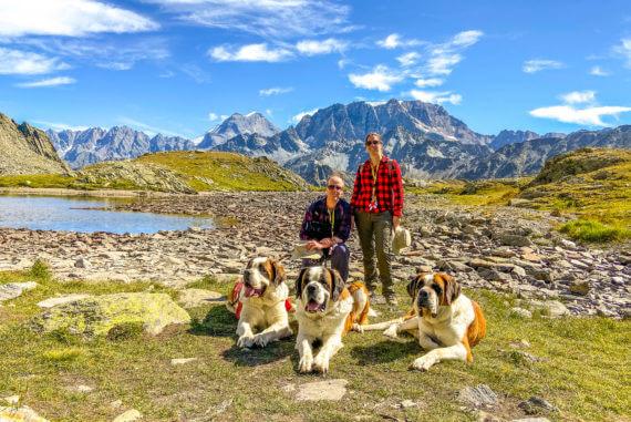 Randonnée Grand-Saint-Bernard avec les chiens