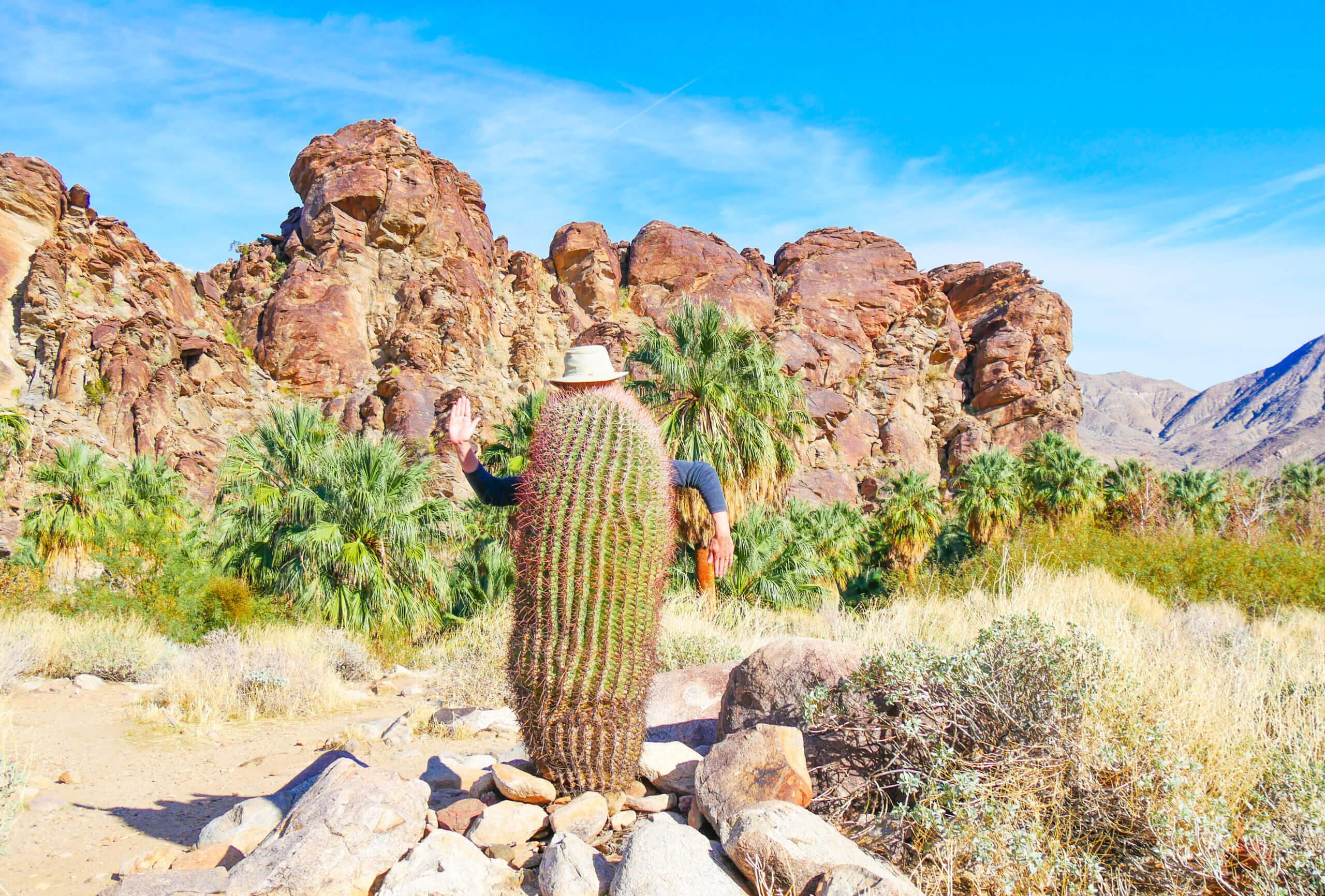 Cactus désert californien Indian Canyon Palm Springs
