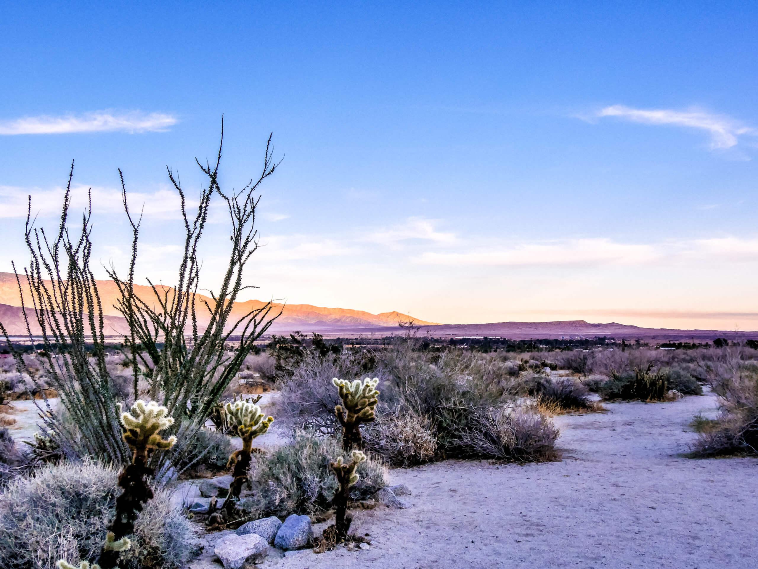 Nature Trail désert Anza Borrego