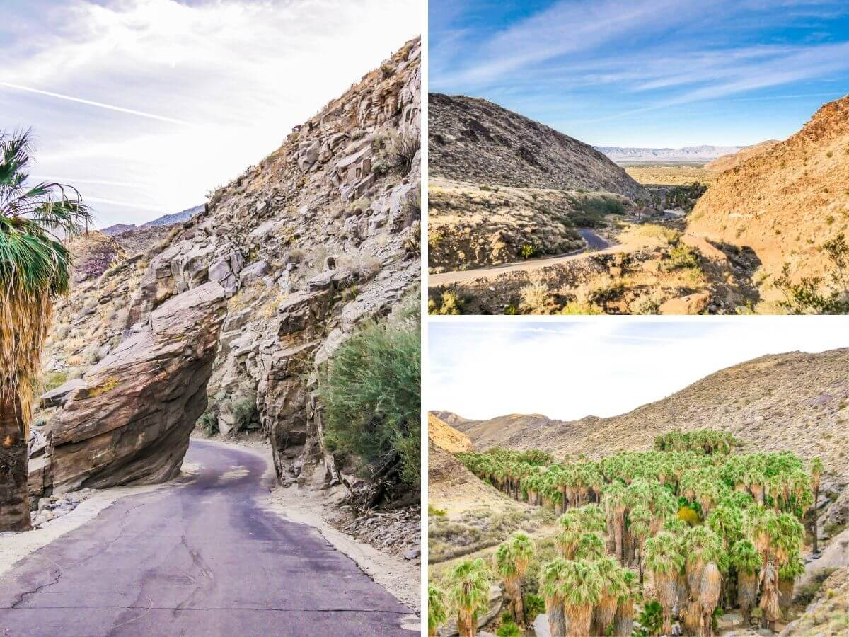 Route et palmeraie désert californien Indian Canyons